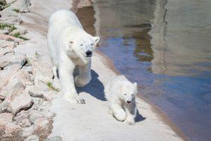 Arctic-Zoo-Ranua-Taxari-Travel-Lapland
