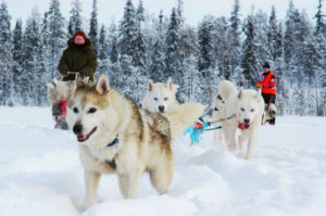 Ullas-husky-farm-safari-Taxari-Travel-Lapland-06
