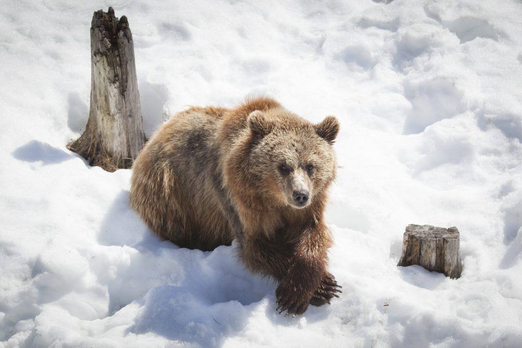Ranua-Zoo-Taxari-Travel-Lapland-10