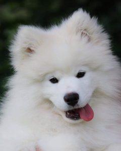 Arctic-Snow-Dogs-Kemi-Taxari-Travel-Lapland-02
