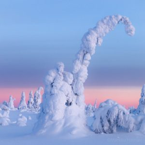 Winter-nature-activity-SeaLapland-Kemi-Taxari-Travel-Lapland