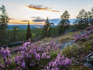 Midnight-tour-summer-Rovaniemi-Taxari-Travel-Lapland-01