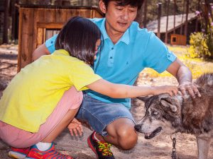 Husky-farm-summer-visit-Taxari-Travel-Lapland-03