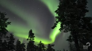 Northern-lights-Lapland-Winter-Taxari-Travel-Lapland-01