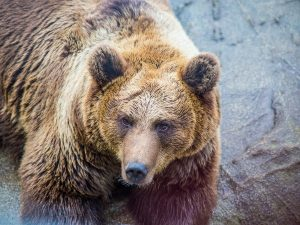 Ranua-Zoo-Taxari-Travel-Lapland-02